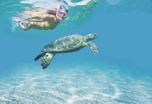 Adopt a turtle wedding package from Le Grand Courlan