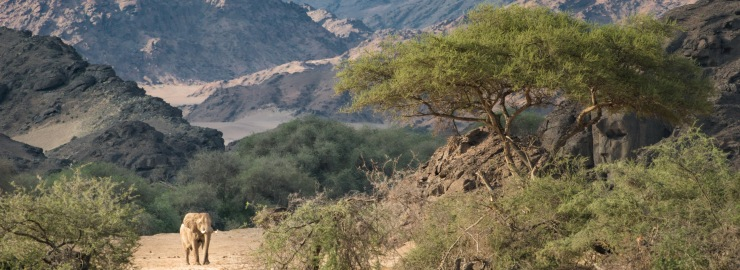 Wilderness Safaris welcomes guests back to Namibia