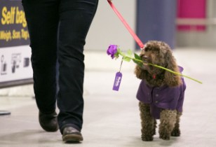 Puppy love at Manchester with Flybe